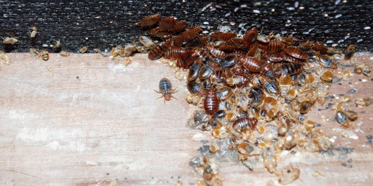 Comment faire face à une infestation de punaises de lit à Lyon